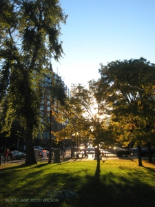 Sun shining through trees on Boston Common-click for larger image